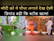 अयोध्या में मोदी को पारिजात का पौधा लगाते देख बढ़ी डिमांड, जानिए खूबियां