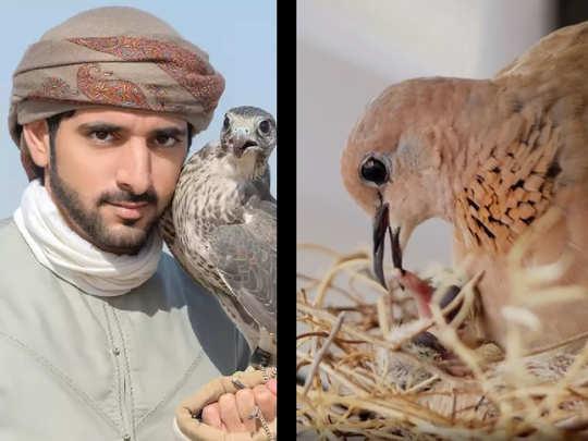 Prince Sheikh Hamdan bin Mohammed bin Rashid Al Maktoum
