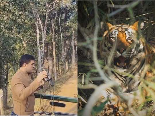tiger came in front of mahendra singh dhoni at kanha tiger reserve park, see pictures
