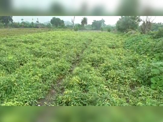 Dhanbad News: मेहनत से कचड़े के ढेर को बना डाला उपजाऊ भूमि, अब मंडियों में पहुंचती है यहां से सब्जियां