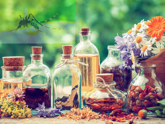 herbal oils to prevent mosquito bytes home remedies for mosquitoes protection in hindi