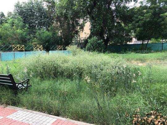 पार्क में बड़ी-बड़ी झाड़ियों से टहलना हुआ मुश्किल