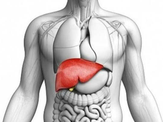 reasons symptoms and treatment of liver cirrhosis in hindi
