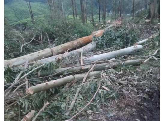 chinnakkanal tree cutting