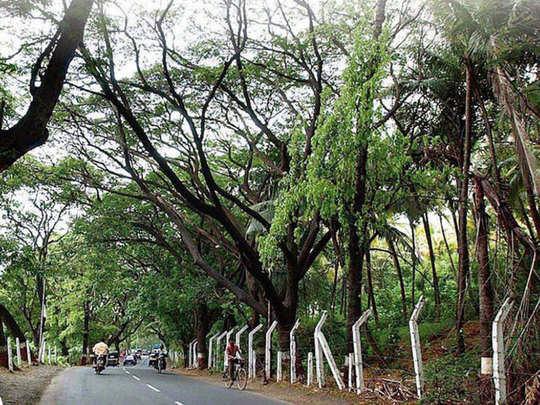 ruinous exotic tree