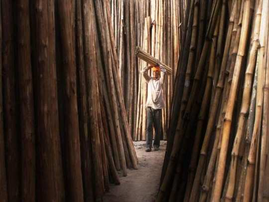 बांबू उद्योगवाढीस चालना