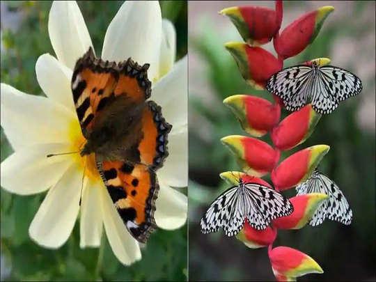 september of butterflies