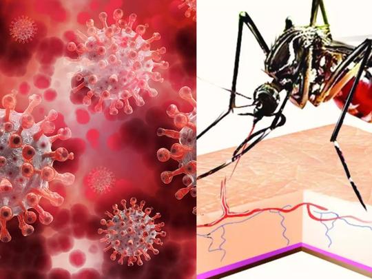 dengue corona