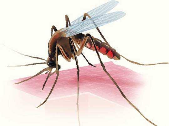 मच्छरों की ब्रीडिंग पर अस्पताल और मेट्रो स्टेशन का चालान