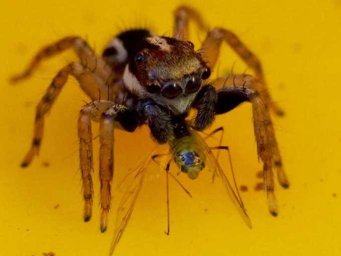 Spider 03