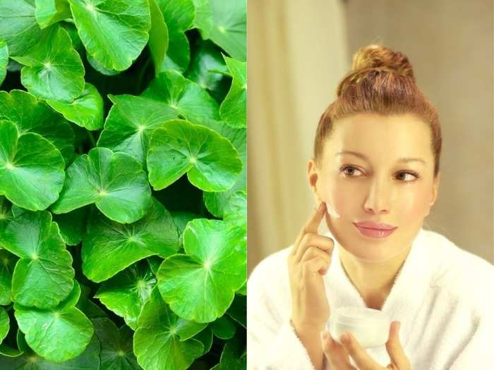 how ancient herb gotu kola and cica cream benefits sensitive aging and dry skin