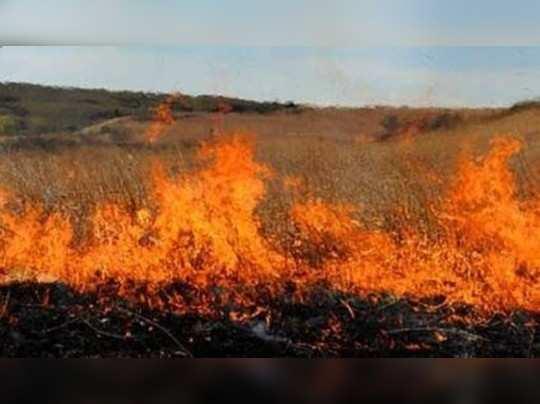 Sitapur News: सेटेलाइट ने पकड़ी पराली जलाने की घटना, डीएम के आदेश पर दो किसानों पर होगा मुकदमा