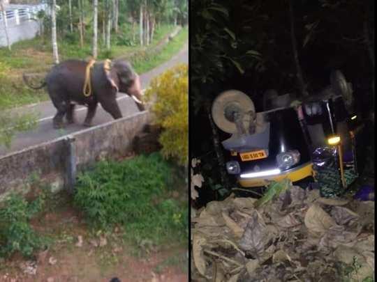 Kottayam Elephant Attack