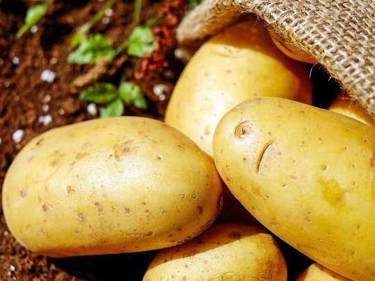potato: plenty in cold storage but price is 45-50 a kg, know why