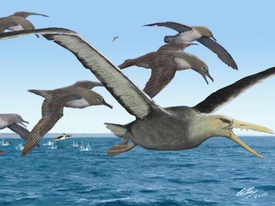 Antarctic fossil