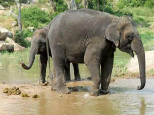 Kerala News: केरल में होगा दुनिया का सबसे बड़ा एलीफेंट केयर सेंटर