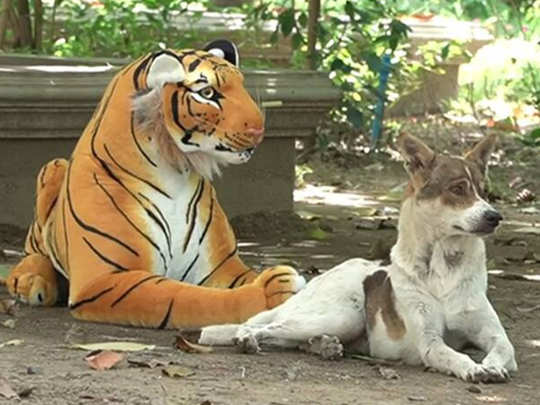 Youtuber Pranked Different Animals With A Tiger Toy