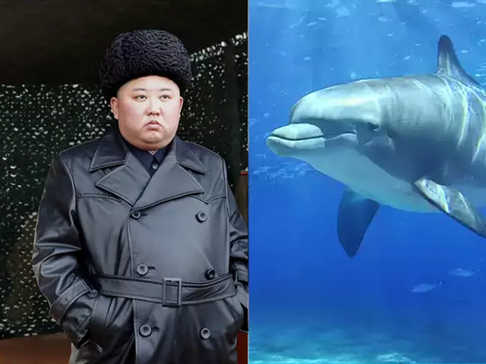 kim jong un north korea training dolphins to clear mines and attack on enemy