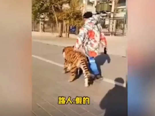 dog painted as tiger