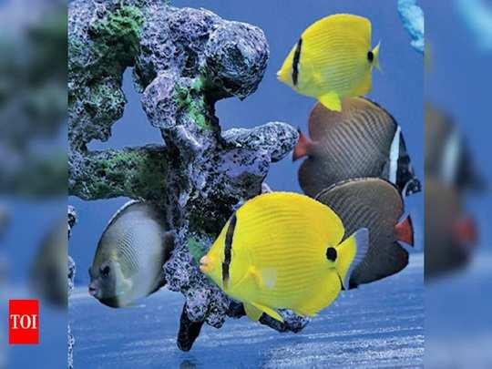 ornamental fish farm training