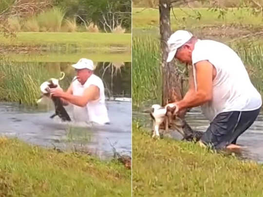 Man recues pet dog from alligator