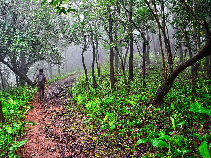 maharashtra forest