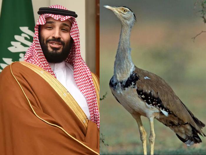 pakistan imran khan issued saudi arabian crown prince permits for houbara bustards hunting