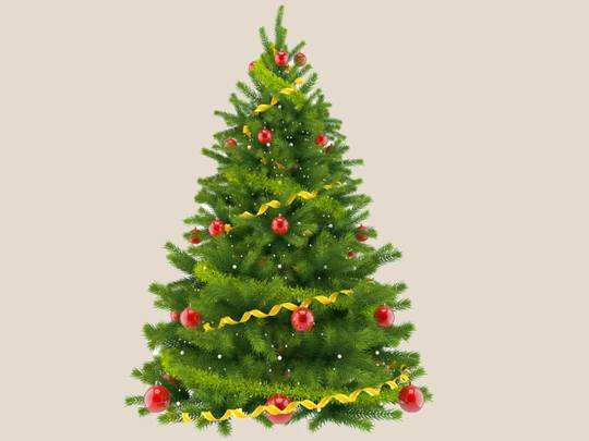 Christmas Day Store : इस बार बनाएं क्रिसमस को और भी खास, घर ले आएं ये Christmas Tree