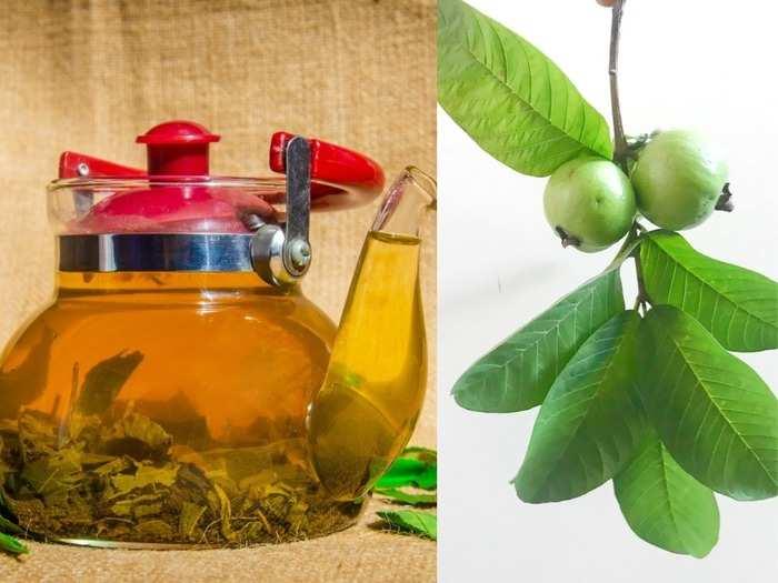 guava leaf tea benefits for health guava leaf tea benefits in diabetes