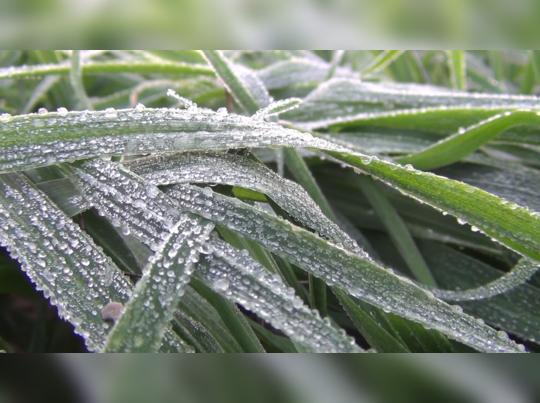 Rajasthan : गर्मियों में 51 डिग्री रहने वाले चूरू में इस बार की सर्दी में तोड़ा 10 साल का रिकॉर्ड, जानिए डिटेल्स