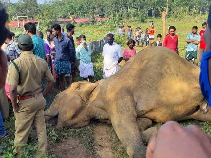 Wild Elephant Death in Malappuram