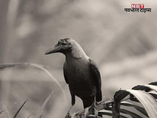 rajasthan news hindi update - 2021-01-05T205925.584