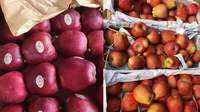 ईरानी-अफगानी सुर्ख लाल सेबों की आवक से घटे हिन्दुस्तानी सेबों के दाम!
