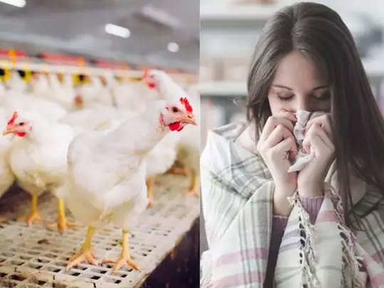 Delhi-Bird-Flu