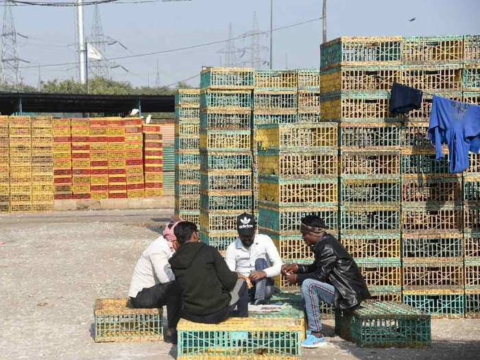 ban on sale of chicken meat in delhi after confirmation of bird flu, silence in the mandis