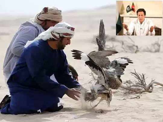 Imran UAE Busterd 01