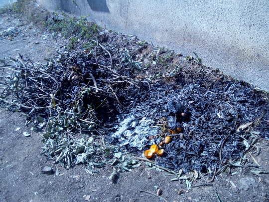 सतत जाळतात कचरा