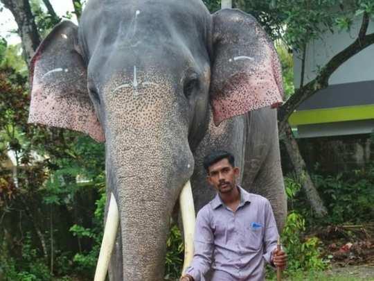 vishnu and elephant