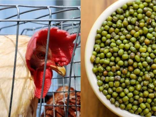 cant have chicken and eggs in bird flu try best 8 vegetarian sources of protein