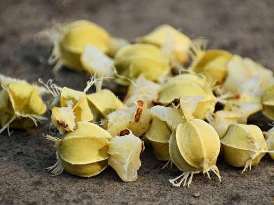 health benefits of indian gooseberry amla seeds in various diseases