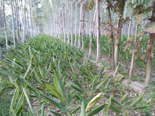 बंजर भूमि को उपजाऊ बनाने यह है गुजरात मॉडल (File Photo)
