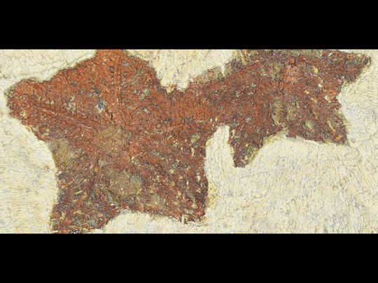 oldest know starfish fossils 48 crore years old found in morocco