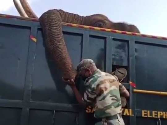 Elephant Masanagudi