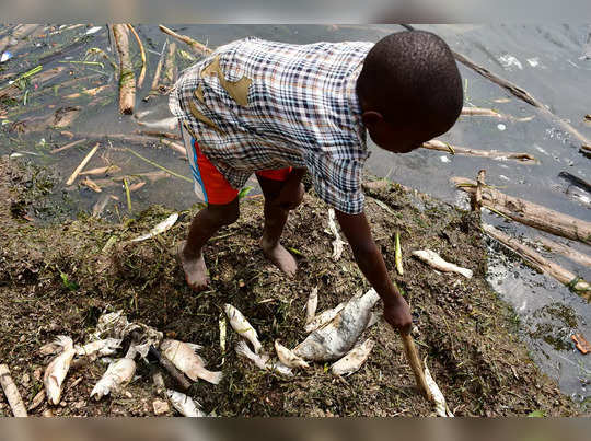 A child looks at dead fish that was swept by waves to the shores of Lake Victoria in at the Kigungu landing site in Entebbe