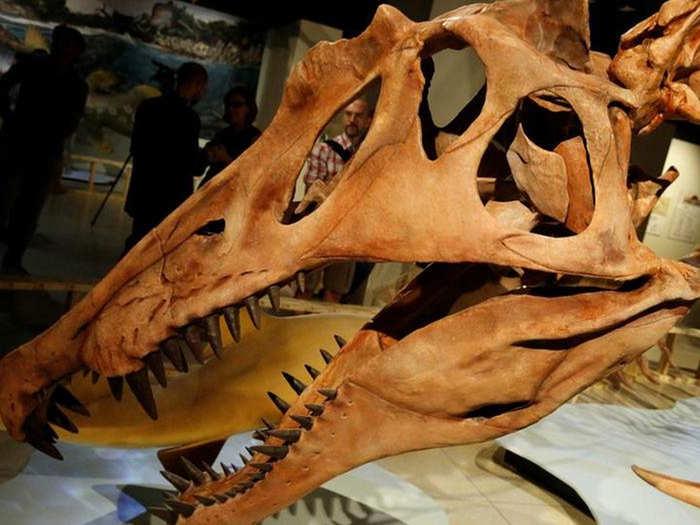 bizarre gigantic dinosaur spinosaurus was inefficient at swimming in water