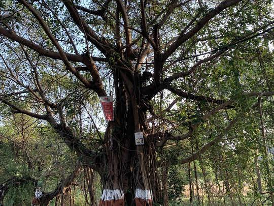 TREE-EDIT