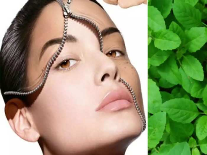 ayurvedic remedies how to use tulsi leaves for face and teeth in marathi