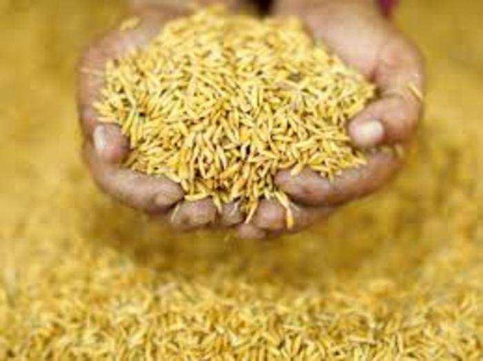 एमएसपी पर धान की खरीद 18 प्रतिशत बढ़कर 614.25 लाख टन की हो चुकी है।