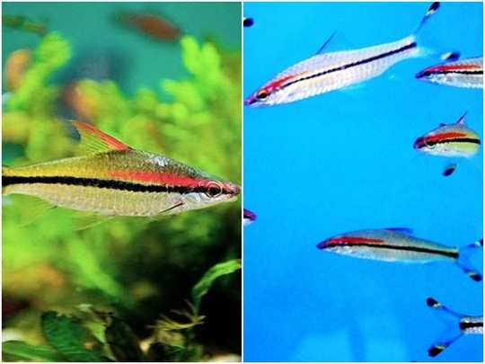 miss kerala fish