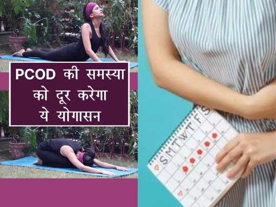 shashank bhujangasan or cobra pose to cure pcod in girls